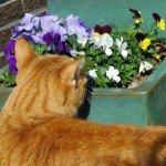 fleur helpen