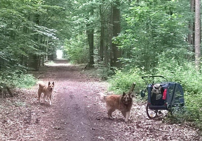 hondenkar
